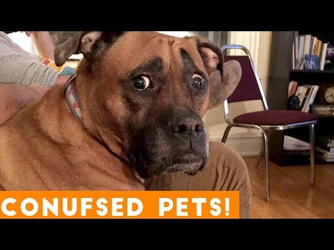 Xxx Mp4 Funniest Confused Pets Compilation 2018 Funny Pet Videos 3gp Sex