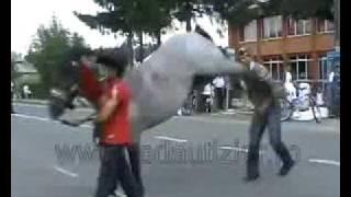Muito Engraçado!! COICE do Cavalo