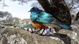 Tanzania 2016 GoPro Video