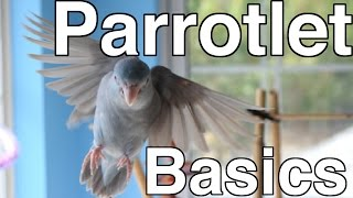 Parrotlet Care For Beginners   Topics