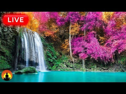 🔴 Study Music 247: Concentration Music, Relaxing Music, Sleep Music, Meditation Music