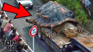 Top 10 Most Oversized Animals Around The World
