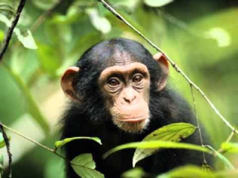 Odgłosy zwierząt dźwięki jakie wydają zwierzęta