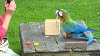 Einstein Bird: Smart Parrot Solves Riddle