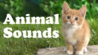 😺 Learn Animal Names and Sounds for Children | Best Way to Learn Animal Names For Kids 🐶