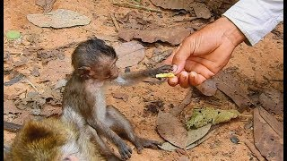 Lori weakness hungry tooo much | New friend give some food  to thin poor baby Lori.