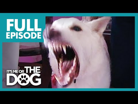 Monster German Shepherd Ben Full Episode It s Me or the Dog