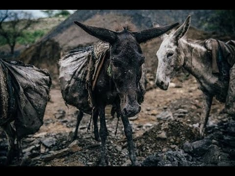 These Cruel And Sad Photos Will Show You How Donkeys Lead Their Live