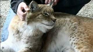 Hawk Creek Wildlife - Loretta Jones - An Introduction