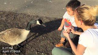 Vlog #507: Duck, Duck, Goose!