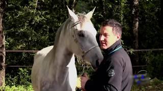 animal mating. horse natural mating