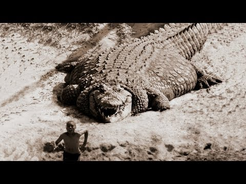 TOP 10 LARGEST CROCODILES In The World