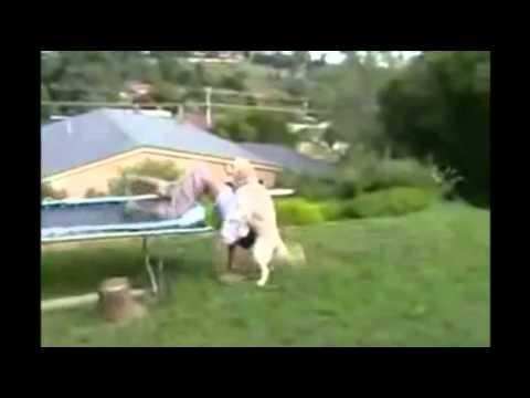 Xxx Mp4 Dog Fucks Young Guy 3gp Sex