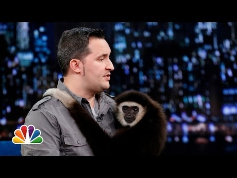 Jeff Musial Otters Gibbon and Water Buffalo Part 2 Late Night with Jimmy Fallon