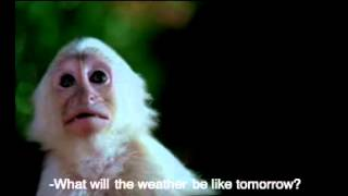 What will the Weather be like Tomorrow?
