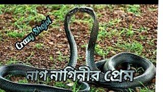 সত্যিকারের নাগ-নাগিনীর প্রেমের ভিডিও ধরা পড়েছে বাস্তবে~Real Nag naginir Prem