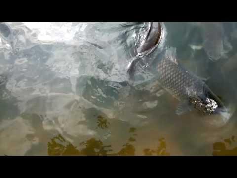 Xxx Mp4 Rourkela IG Park Fishes 3gp Sex