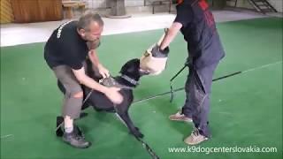 Globguard K-9 Dog Center Slovakia Dual Purpose Police Dogs For Sale