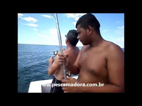 Grupo abate espécie ameaçada durante pescaria em Itanhaém SP