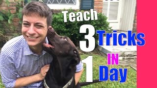 Teach Your Dog 3 Tricks in 1 Day! Speak, Shake and…
