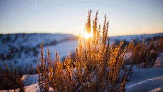Morning Music Relaxing - Light Background Instrumental Music