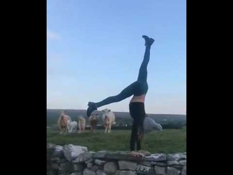 When cows watching you doin your yoga and it look pretty fuckin awesome !