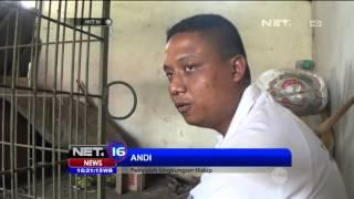 Warga Ciamis Tangkap Seekor Macan Tutul yang Berkeliaran di Kebun Warga - NET16