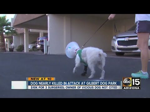 Woman says her dog nearly killed in attack at Gilbert dog park
