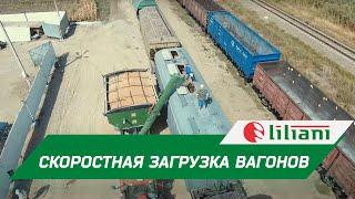 Скоростная загрузка вагонов зерном в Ростовской области