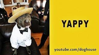 Pharrell - Happy Parody -