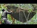 Download Video Download Berburu Madu Lebah Liar Hutan | Hunting honey bee forest 3GP MP4 FLV