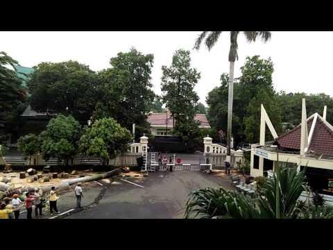 Tebang pohon Palm di Polres Metro Jakarta Selatan