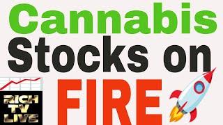 Cannabis Stocks on FIRE