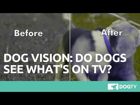 Xxx Mp4 Dog Vision TV Channel Especially Created For Dogs DogTV 3gp Sex