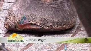 Cruelty against elephant