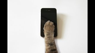Why we should be more like cats than dogs when it comes to social media