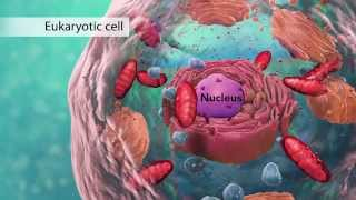 Biology: Cell Structure