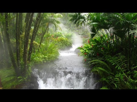 1 Hour of Jungle Music and Tribal Music