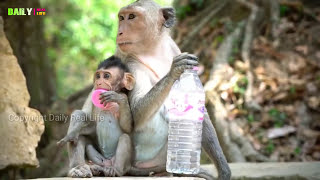 Amazing Monkeys mating Funny - Monkeys meeting tourist in Siem Reap Angkor