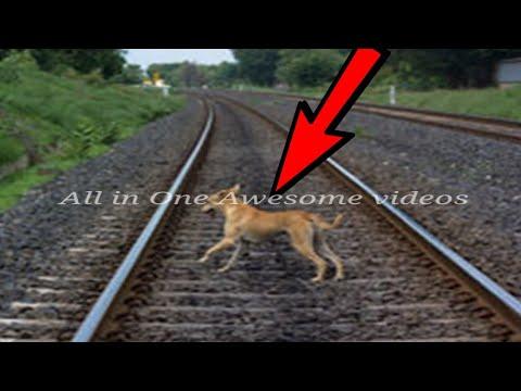 आ रही थी ट्रेन, ट्रैक पर खड़ा था कुत्ता, फिर जो हुआ...