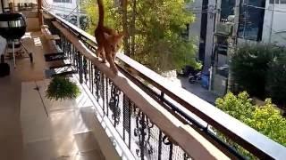 Catwalk Accident