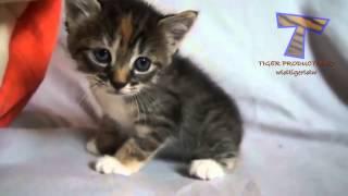 små killinger mjavende og taler  sød kat kompilering