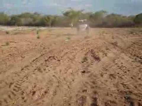 Formação de pastagens semeadura Grassland