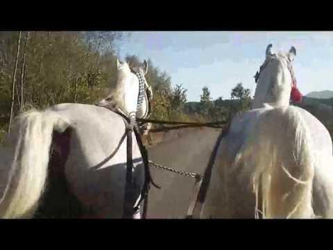 Kuajt e Haki Kocit Bregavi dhe Batosta