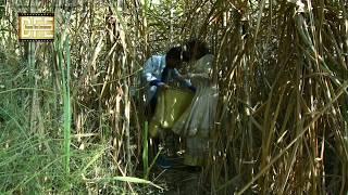 गन्ना के खेत मै गमछा बिछाके सैंया दिलवा मांगै छैय // मैथिली कामेडी