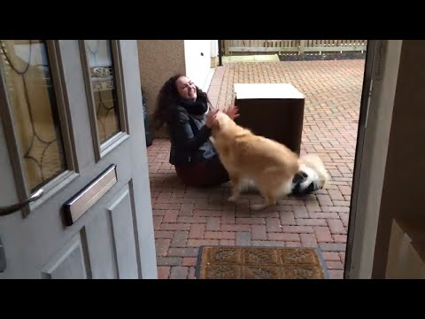 Xxx Mp4 Former Owner Surprises Dog By Hiding In A Box 3gp Sex