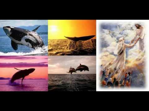 A Prophecy of The Dolphins: Messengers of GOD (Words from Jehovah God)