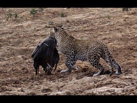Safari in Yala National Park, Sri Lanka safari topten@world