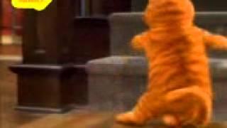 munni badnam cat dog dance