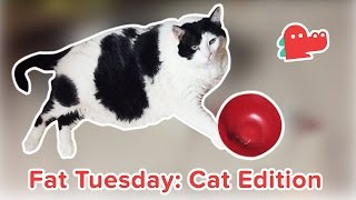 Fat Cats for Fat Tuesday: Funniest Fat Cats, Clips & Compilation